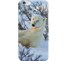 Yoga Bear seated silly iPhone Case/Skin