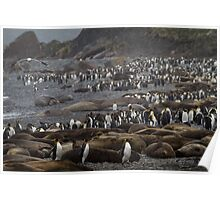 King Penguin & Elephant Seal Beach  Poster