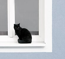 Black Cat in the Window on Powder Blue by BrookeRyanPhoto
