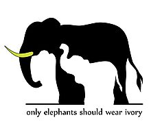 Only Elephants Should Wear Ivory (White Background) Photographic Print