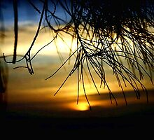 Between the pine Needles by Chris Chalk
