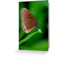 Amazing Brown Butterfly Greeting Card