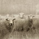 Six Sheep - or maybe more by Clare Colins