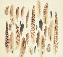 Found Feathers by Cassia