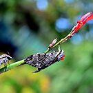 moth by Loreto Bautista Jr.