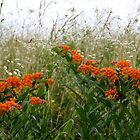 ADD ORANGE TO WILDFLOWERS IN THE OZARKS by Brenda Planchon