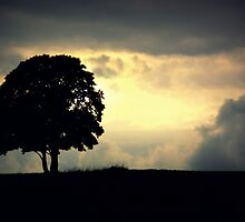 The Lonely Tree by Alex Boros