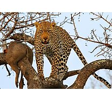 Male leopard with catch! Photographic Print