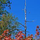 Autumn by Evelyn Laeschke