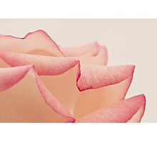Rose Petals - Macro  Photographic Print