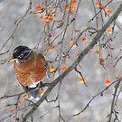 Birdie in the snow by Alberto  DeJesus