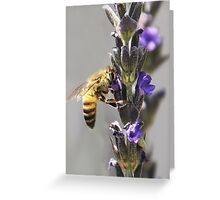 Mr. Bumble In the Lavender Greeting Card