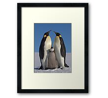 Emperor Penguins and Chick - Snow Hill Island Framed Print