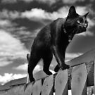 Cat on a Mission by Ladymoose