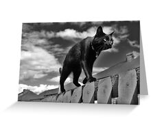 Cat on a Mission Greeting Card