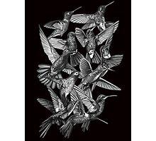 Hummingbird Dance in Sharpie (Grayscale Edition) Photographic Print