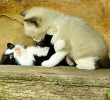 Kitten Play by littlecritters