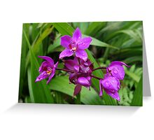 Tropical Purple Orchids Greeting Card