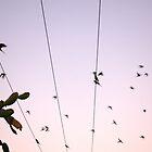 Birds in Motion by Damian