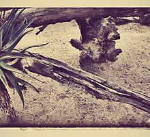outback scene by AprilRichardson