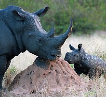 Rhino Mother and Child! by jozi1
