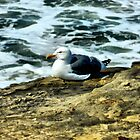 Sitting Gull by debidabble
