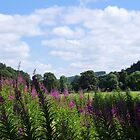 Quintessentially England 21 - Rose Bay Willowherb Landscape by Francis Drake