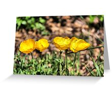 Icelandic Poppies Greeting Card