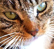 Our Cat by Bob Weaver