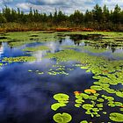Volo Bog Lily Pond by Roger Passman