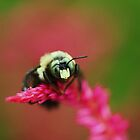 colorful bee by ANNABEL   S. ALENTON