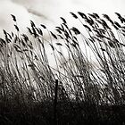 Bending in the Wind © by Ethna Gillespie
