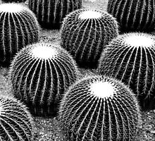 Cacti © by Ethna Gillespie
