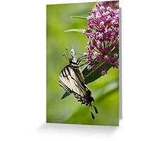 Beautiful Swallowtail Butterfly Greeting Card