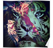Tiger_8617 Poster