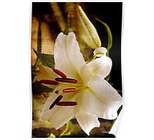 Sweet Days of Summer ~ The Lily's in Bloom Poster