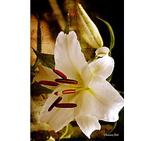 Sweet Days of Summer ~ The Lily's in Bloom Photographic Print