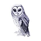 Sooty Owl by ThistleandFox
