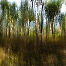 Gum trees by Terri-Anne Kingsley