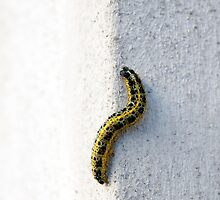 Caterpillar on the wall by Uršula  Belingar