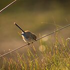 On The Fence by Matt Fricker Photography