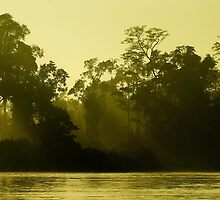 Malaysian jungle! Green by turleytw