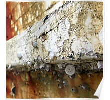 Lichen and Barnacle Shells Poster