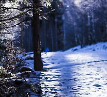 Snowflakes and Frozen Plants - Travel Photography by JuliaRokicka