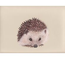 The Hedgehog Photographic Print