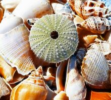 Beach Treasures by lisa1970