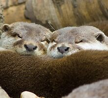 Sleepy Otters by TomGreenPhotos