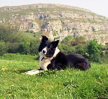 Indy on the Orme! by Michael Haslam
