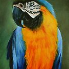 BLUE and GOLD MACAW by Lynn Hughes