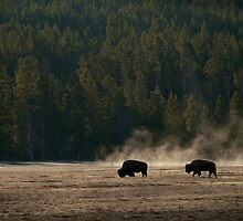 Bison and Steam by Trent Sizemore